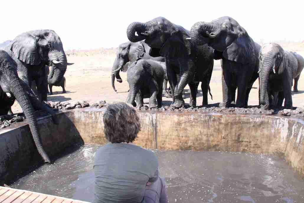 Watching elephants drink in Hwange