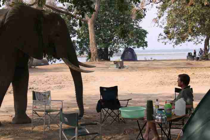 elephant visiting main camp