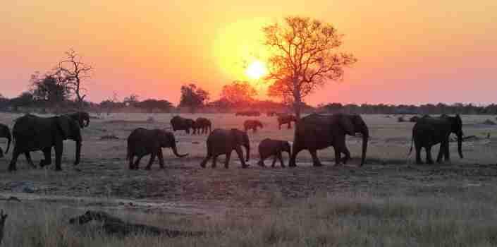 Hwange elephants at sunset