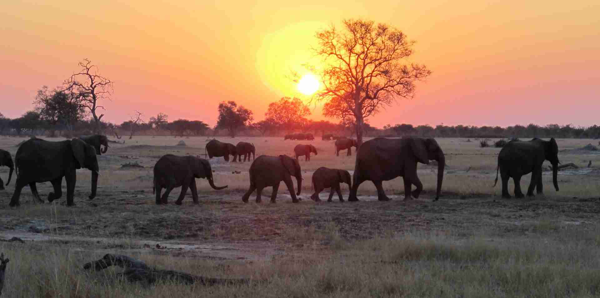 Hwange elephants at sunset