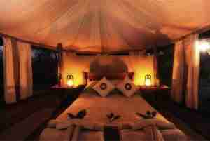 Love Bird Special at Kanga Camp-13