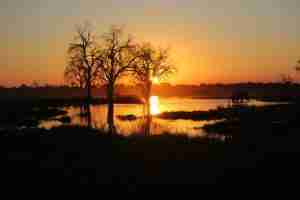 Love Bird Special at Zambezi Expeditions-10