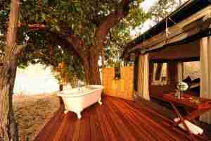 Love Bird Special at Kanga Camp-16