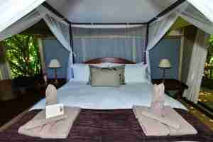 Love Bird Special at Kanga Camp-20