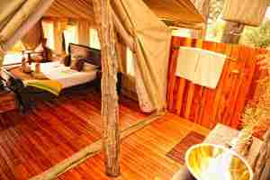 Love Bird Special at Somalisa Expeditions-6