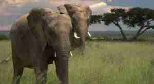 Elephants: Valentines Specials At Imire