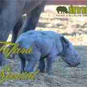 Tafara Special at Imire - Feature Image