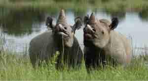 Rhinos: Valentines Specials At Imire