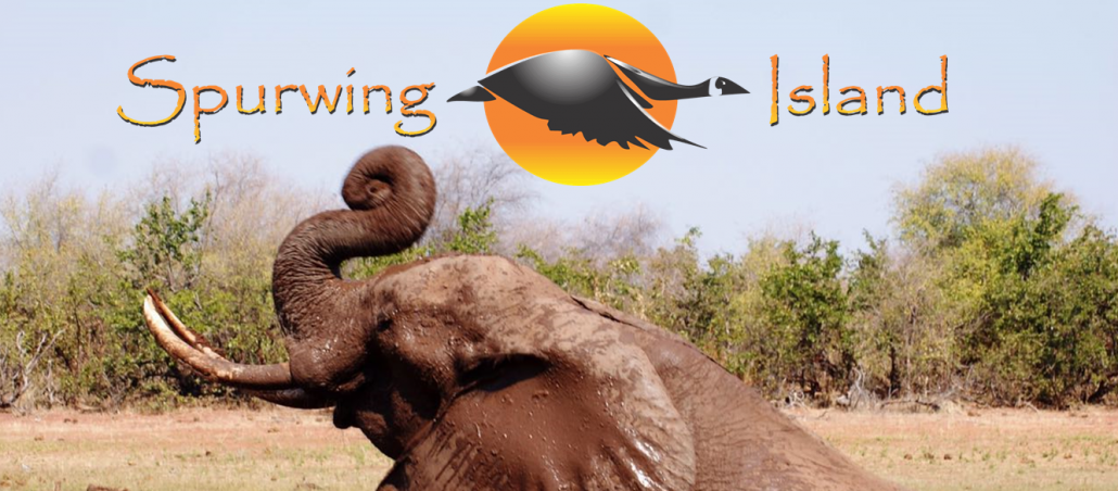 spurwing-island-feature-logo-image