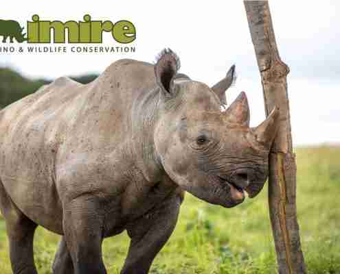 Imire Rhino & Wildlife Conservation Mid-Year Update Feature