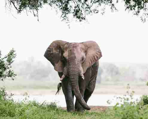 Elephant at Gonarezhou national park in zimbabwe