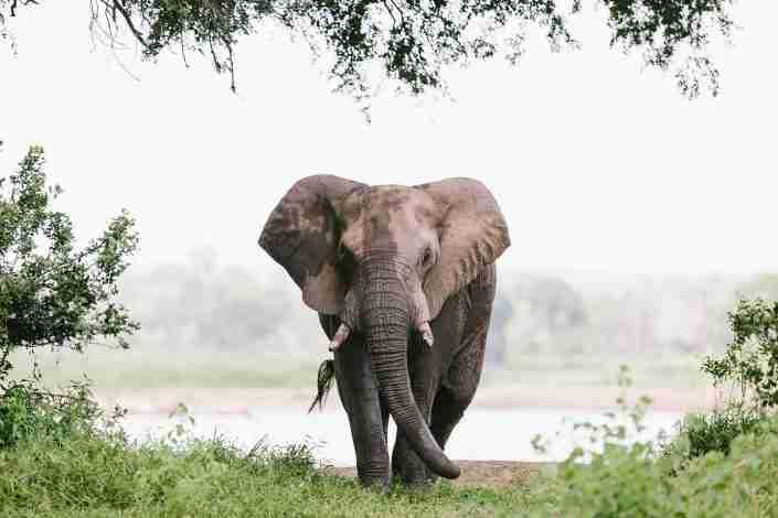 Elephant at Gonarezhou national park in zimbabwe