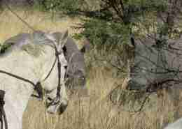 White Rhino & Horses in Matopos with James Varden / Ride Zimbabwe