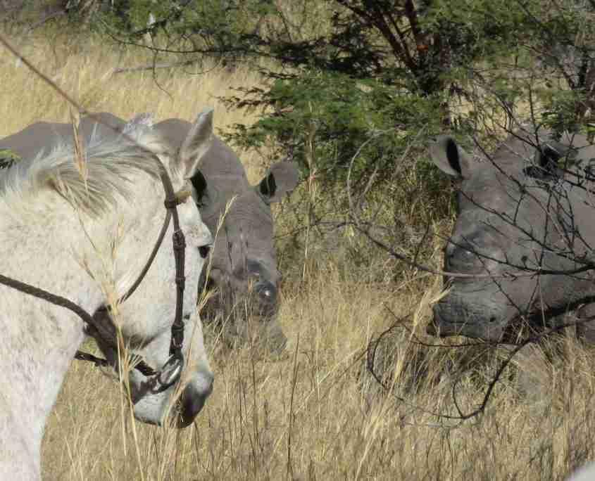 White Rhino & Horses in Matopos with James Varden / Ride Zimbabwe
