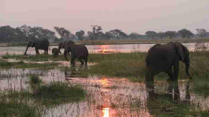 mana elephant family in river